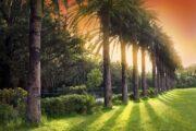 ABC Travel - Arboretum Trsteno